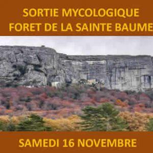 Sortie mycologique <br />Forêt de la Sainte Baume <br /> le samedi 16 novembre 2019