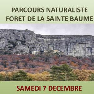 Parcours naturaliste<br /> Forêt de la Sainte Baume <br /> le samedi 7décembre 2019