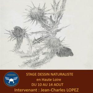 Stage de dessin naturaliste du lundi 10 au 14 août