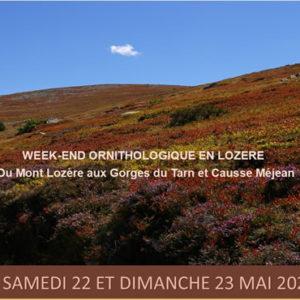 Parcours ornithologique – Week-end en Lozère, du Mont Lozère aux Gorges du Tarn et Causse Méjean <br/> le dimanche 6 juin 2021